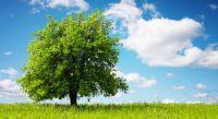 albero sinonimo di vita